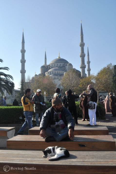 Cat, man and the Blue Mosque